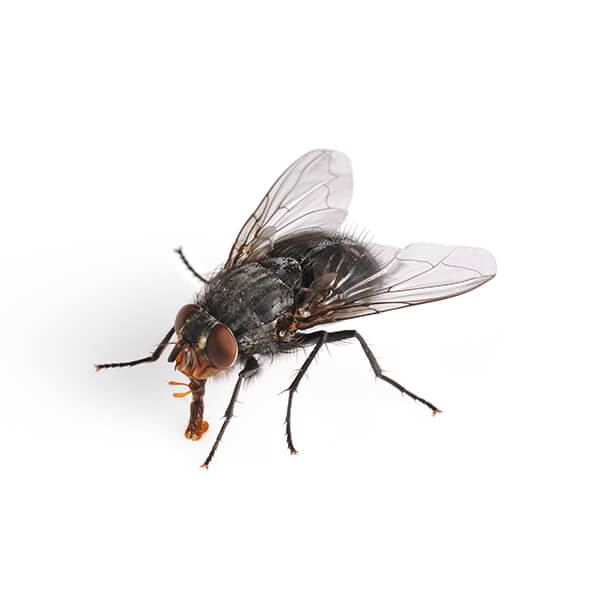 Las Vegas Fly Control and Extermination