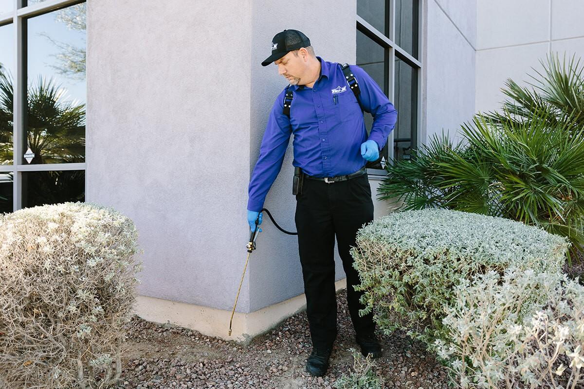 pest proof Las Vegas Pest Control Services