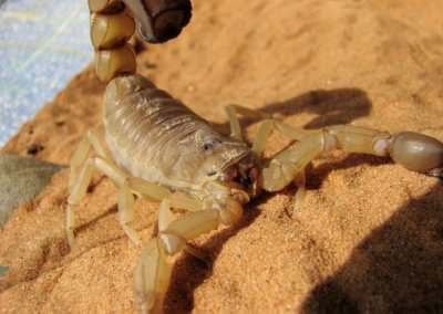 What to do when you spot scorpions in your home