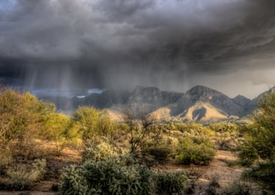 Monsoon Season and the Effect on Pests
