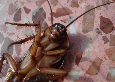 Kicking Cockroaches Out of the House