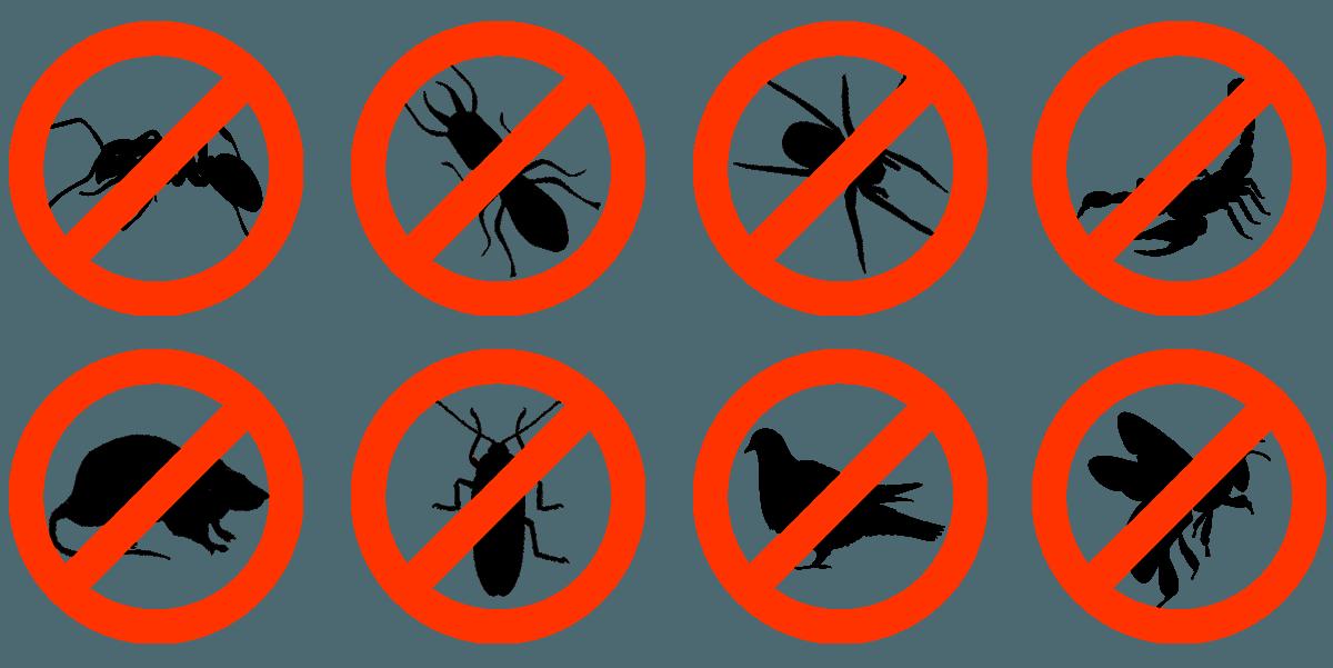 no pests at home guaranteed