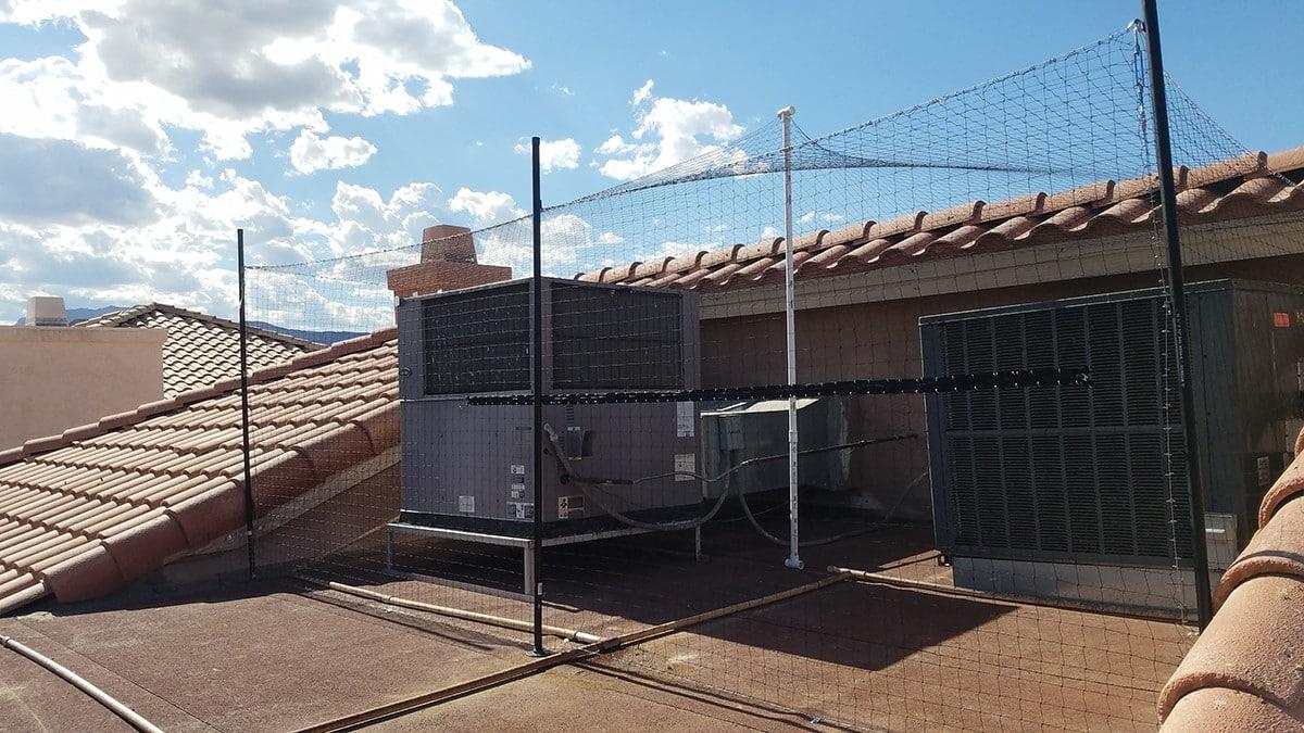 bird removal service las vegas