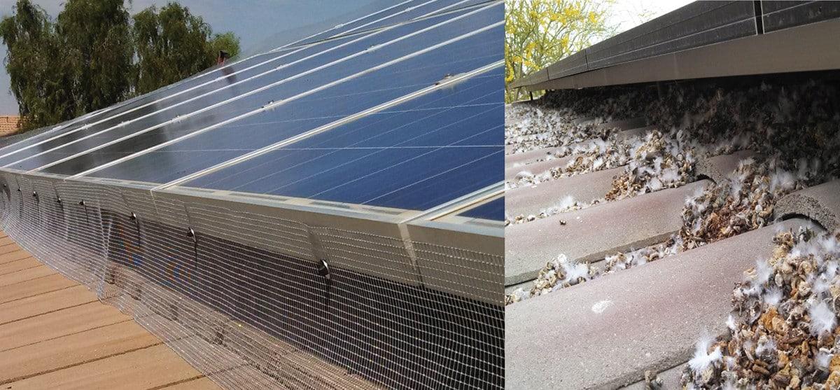 Bird Netting Around Solar Panels