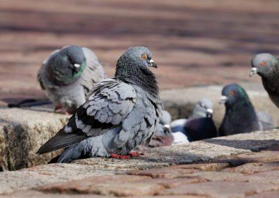 Banishing Birds
