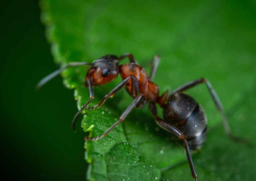 ants prevalent pest