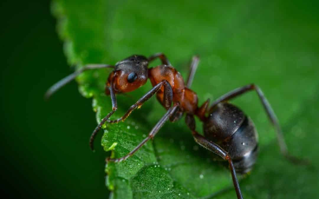 Ants: The Most Prevalent Pest