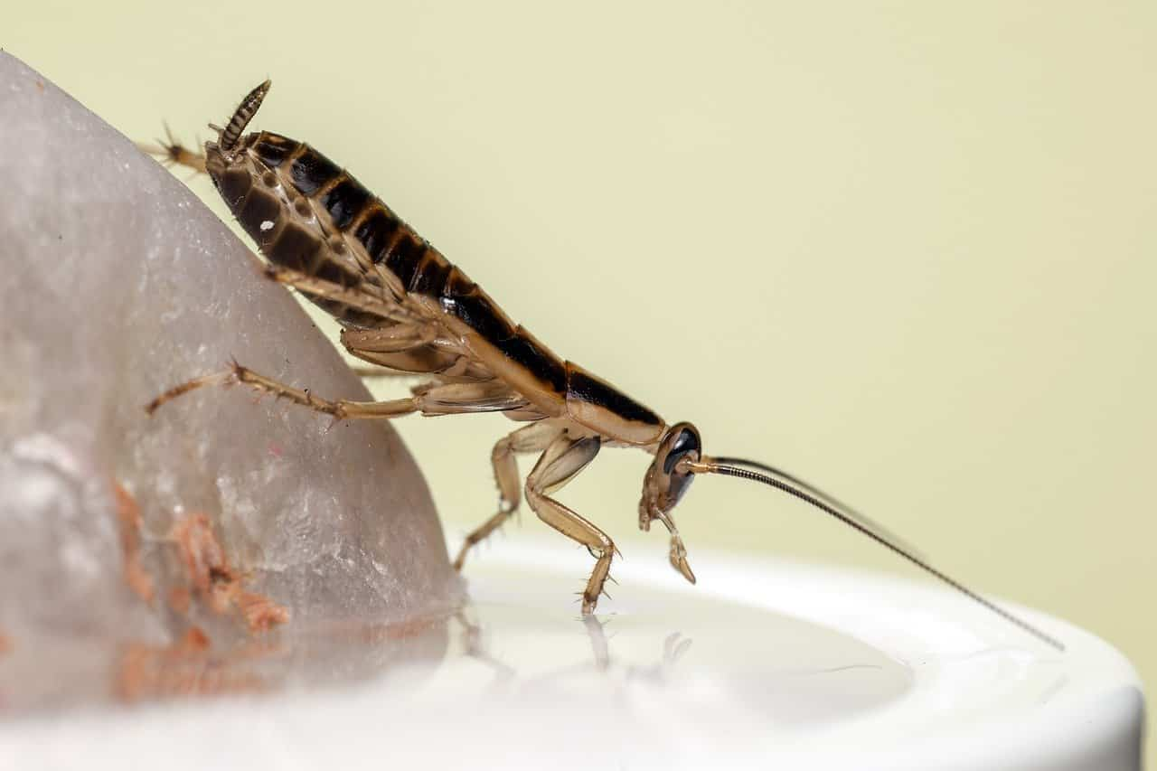 insects affect health roach closeup