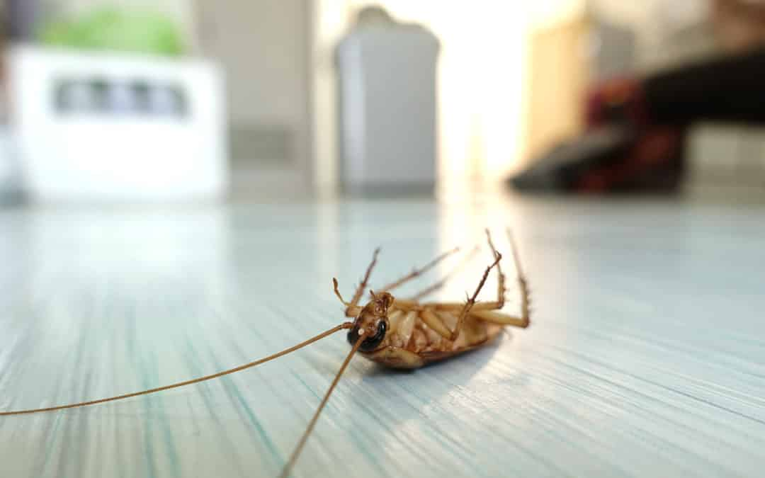 How House Pests Affect Your Health