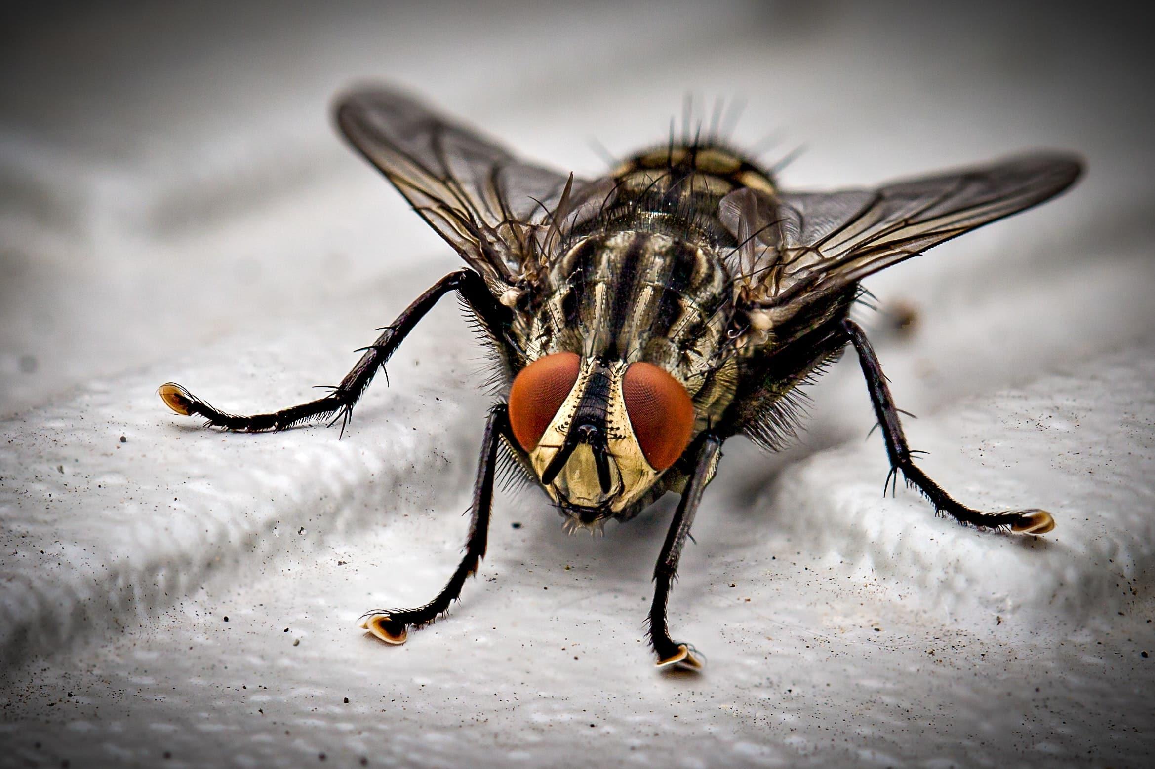 pest free home